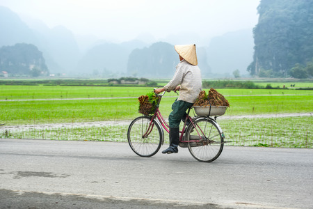 conical hat: Vietnamese woman at conical hat on bicycle going for work at rice field. Ninh Binh, Vietnam travel landscapes and destinations