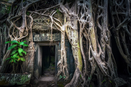 banyan tree: Ancient Khmer architecture. Ta Prohm temple with giant banyan tree at Angkor Wat complex. Siem Reap, Cambodia