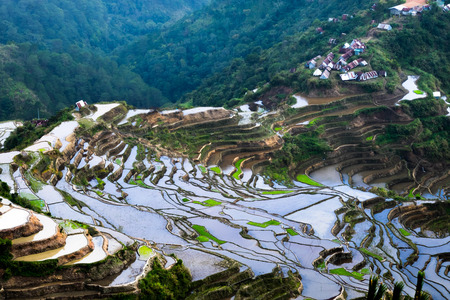 world travel: Village houses near rice terraces fields. Amazing abstract texture with sky colorful reflection in water. Ifugao province. Banaue, Philippines UNESCO heritage Stock Photo