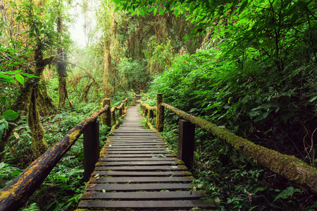 Jungle landscape Wooden bridge at misty tropical rain forest.