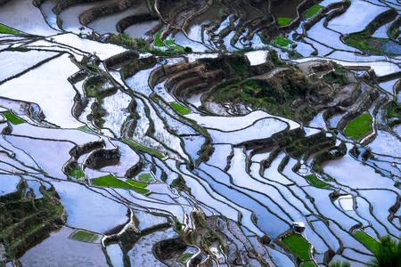Verbazingwekkende abstracte textuur van rijstterrassen velden met kleurrijke hemel weerspiegeling in het water. Provincie Ifugao. Banaue, Filippijnen UNESCO erfgoed Stockfoto