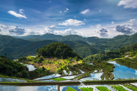 philippines: Amazing panorama view of rice terraces fields in Ifugao province mountains under cloudy blue sky. Banaue, Philippines UNESCO heritage
