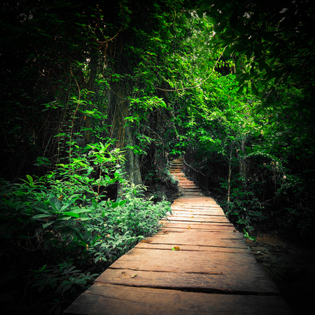 Fantasy jungle deep forest in dark colors. Wooden road path way through tropical trees. Concept landscape for mysterious background