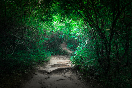 Fantasy landscape of tropical jungle forest with tunnel and path way through lush Фото со стока