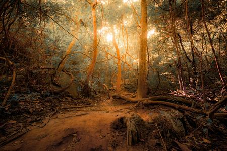 Fantasy foresta giungla tropicale nei colori surreali. Concetto paesaggio per lo sfondo misterioso Archivio Fotografico - 46475070