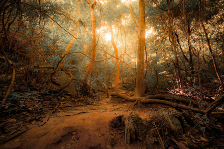 dark forest: Fantasy tropical jungle forest in surreal colors. Concept landscape for mysterious background