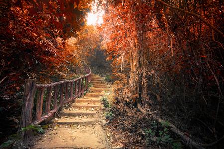 Fantasie bos in de herfst surrealistische kleuren. Weg weg weg door dichte bomen. Concept landschap voor mysterieuze achtergrond Stockfoto
