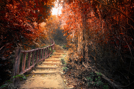 Fantasy forest in autumn surreal colors. Road path way through dense trees. Concept landscape for mysterious background. Stock Photo
