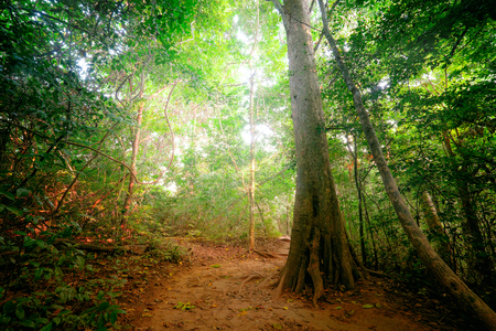Fantasie tropische jungle bos landschap met weg pad manier. Zonnestralen schijnt door dichte bomen. Thailand natuur