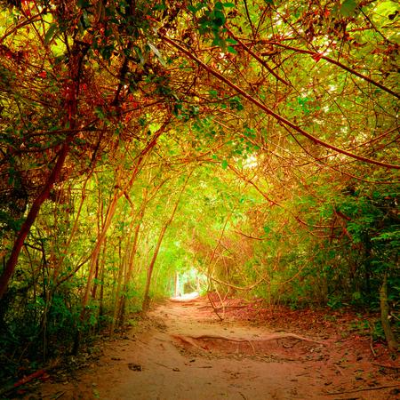 Fantasie jungle bos in surrealistische herfstkleuren met tunnel en het pad weg door tropische bomen. Concept landschap voor mysterieuze natuur achtergrond Stockfoto