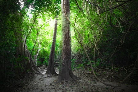 road and path through: Fantasy tropical jungle forest landscape with road path way. Sun beams shining  through dense trees. Thailand nature