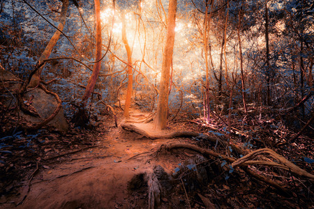 mystery: Fantasy tropical jungle forest in surreal colors. Concept landscape for mysterious background
