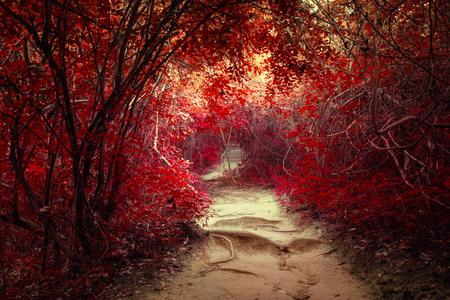 Surreal kleuren van fantasie landschap in tropische jungle bos met tunnel en het pad weg door weelderige Stockfoto