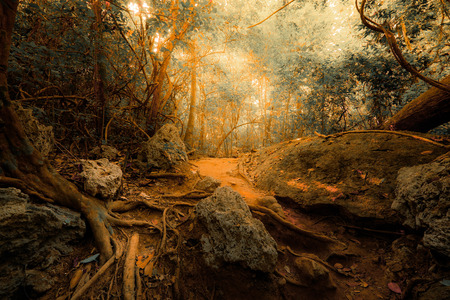 mystery woods: Fantasy tropical jungle forest in surreal colors. Concept landscape for mysterious background