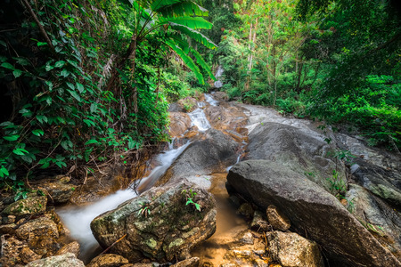 water flowing: Tropical rain forest landscape with jungle plants and flowing water of small waterfall. Doi Inthanon National park, Chiang Mai province, Thailand Stock Photo