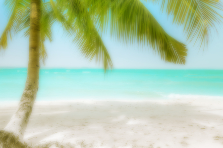 tropical tree: Abstract blurred background for travel concept. Sunny day at amazing tropical beach with palm tree, white sand and turquoise ocean waves. Myanmar (Burma) landscapes and destinations Stock Photo