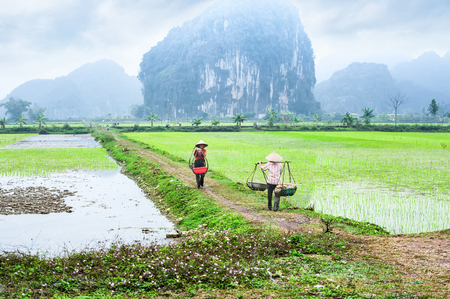 china people: NINH BINH, VIETNAM - FEBRUARY 8, 2014: Vietnamese farmer works at rice field at foggy morning. Organic agriculture at southeast asia Editorial