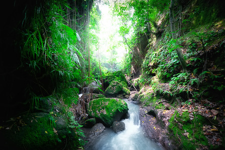 lush: Indonesia wild jungles. Amazing mystery rainforest landscape with small waterfall flowing among tropical plants