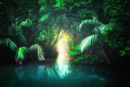 Fantasy jungle landscape of turquoise tropical lake in mangrove rain forest with tunnel and path way through lush. Sri Lanka nature and travel destinations