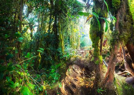 Fantasía mística del bosque cubierto de musgo tropical con plantas de la selva sorprendentes y flores. Paisaje de la naturaleza de fondo misterioso. Malasia