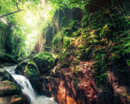 tropical plants: Indonesia wild jungles. Amazing mystery rainforest landscape with small waterfall flowing among tropical plants