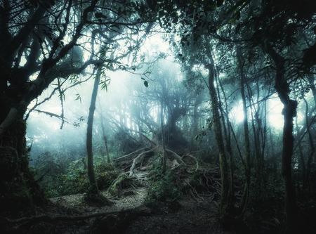 ベクターファンタジー風景素晴らしいジャングル植物の神秘的な熱帯コケに覆われた森での現実的な色。神秘的な自然とおとぎ話の背景の概念
