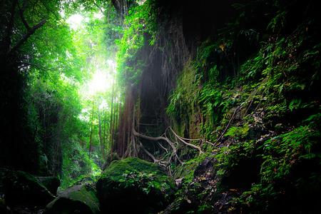 Fantasy mystiek tropisch mossierbos met geweldige jungleplanten en bloemen. Natuur landschap voor mysterieuze achtergrond. Indonesië