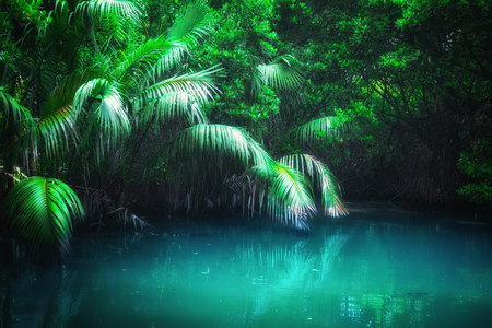 Fantasy jungle landscape of turquoise tropical lake in mangrove rain forest. Sri Lanka nature and travel destinations