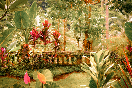 landscape flowers: Surreal colors of fantasy tropical garden with amazing plants and flowers Stock Photo