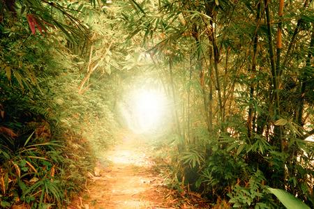 Colores surrealistas de paisaje de fantasía en el bosque de selva tropical con rayos de sol brillando a través del túnel en vegetación densa