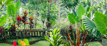 Amazing tropical plants growing in fantasy mossy garden. Panorama view