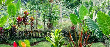 tropicale: plantes tropicales étonnantes de plus en plus dans le fantasme jardin moussue. vue panoramique Banque d'images