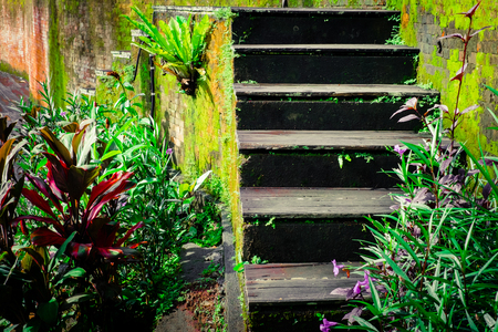 fairy garden: Weathered wooden stairs of abandoned tropical house. Amazing mossy wall and jungle plants on background