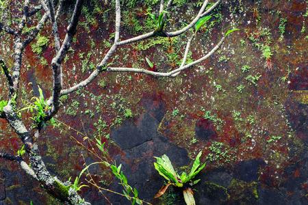 arte abstracto: pared húmeda cubierta de musgo y plantas tropicales en época de lluvias. la naturaleza de fondo tropical Foto de archivo