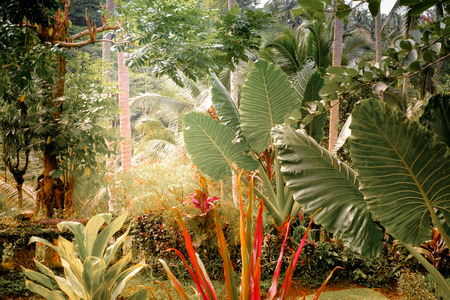 tropical plants: Surreal colors of fantasy tropical garden with amazing plants and flowers Stock Photo