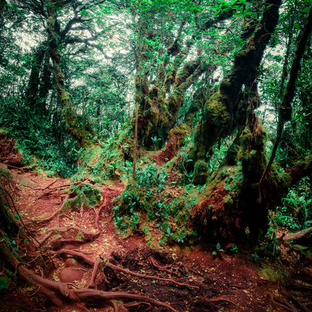 Surreal colors of gloomy tropical forest shrouded in mist and overgrown with shrubs and mossy trees. Frightening nature of somber rainforest. Mysterious nature and fairy tale background