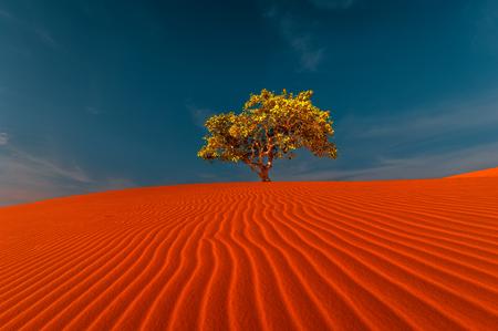 rippled 모래 언덕 및 가뭄 사막 풍경에서 놀라운 푸른 하늘 아래 성장하는 외로운 나무의 멋진보기. 지구 온난화 개념입니다. 자연 배경