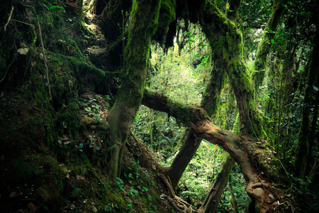 Mysterious landscape of foggy forest. Inclined tree trunk and roots overgrown with thick green moss against tall stems of exotic plant on background. Lush vegetation of tropical rainforest Archivio Fotografico - 105347173