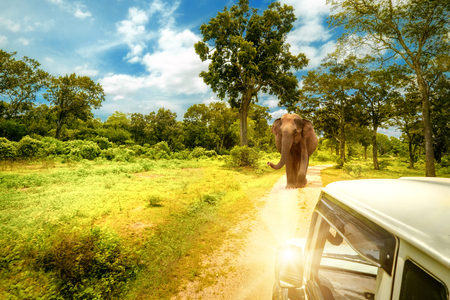 Exploring life of wild elephants and amazing nature landscape at jeep safari in Yala National Park, Sri Lanka Archivio Fotografico - 105347172
