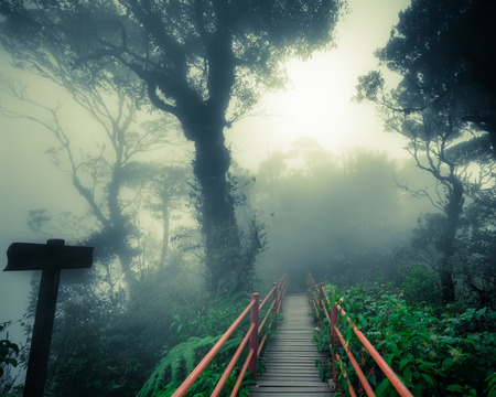 Mysterious landscape of foggy forest with wooden bridge and weathered signpost. Surreal beauty of exotic trees, thicket of shrubs at deep tropical jungles. Fantasy nature and fairy tale background Archivio Fotografico - 105347170