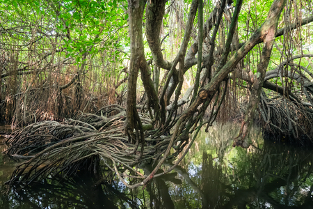 Mysterious landscape and surreal beauty of jungles with tropical river and mangrove rain forest. Sri Lanka nature and travel destinations Archivio Fotografico - 104717454