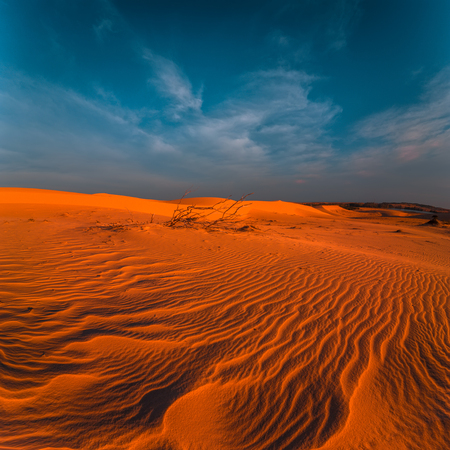 Global warming concept. Stunning view of lonely sand dunes under amazing evening sunset sky at drought desert landscape Archivio Fotografico - 105525921