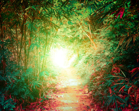 Surreal colors of fantasy landscape at tropical jungle forest with tunnel and path way through dense vegetation Archivio Fotografico - 115909414