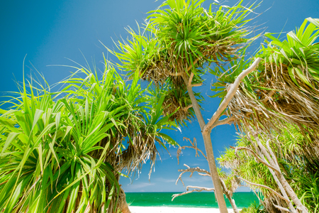 Amazing relaxing view of blue sky at sunny day and foliage of tropical pandanus tree or screw palm growing near ocean. Gorgeous nature landscape, vacation place and travel concept. Archivio Fotografico - 117040154