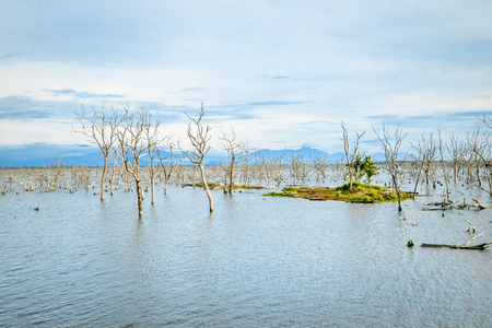 Amazing wild nature of Yala National Park in Sri Lanka. Landscape with river and drowned trees under blue sky Archivio Fotografico - 117040166