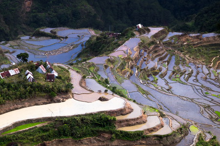 Village houses near rice terraces fields. Amazing abstract texture with sky colorful reflection in water. Ifugao province Archivio Fotografico - 117040167