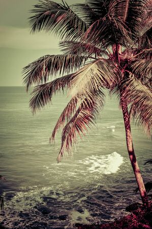 Beautiful tropical landscape with ocean beach and palm tree under golden sunset sky. Image in vintage style. India 版權商用圖片