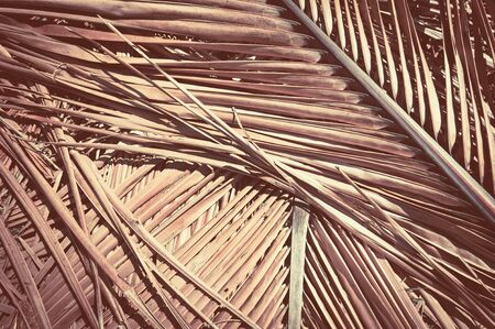 Grunge texture of dry palm tree leaf. Nature background