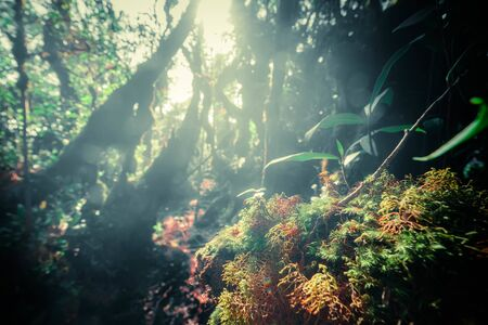 Surreal magic of wild forest in details. Inclined tree roots overgrown with thick green moss against exotic plants on background. Lush vegetation of tropical rainforest. Fairy tale concept