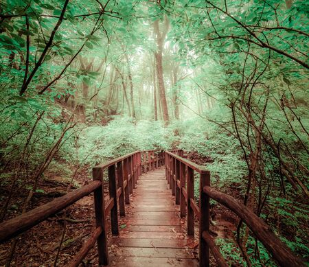 Mysterious landscape of foggy forest with wooden bridge runs through dense foliage. Surreal beauty of exotic trees, thicket of shrubs at tropical jungles. Fantasy nature and fairy tale background